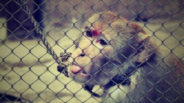 The American Society for the Prevention of Cruelty to Animals